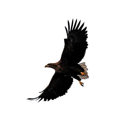Hotade rovfåglar får utfodringsplats