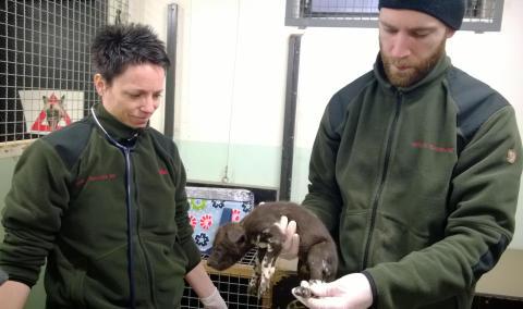 13 nyfödda vildhundar i Borås Djurpark