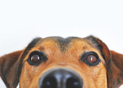 Per Jensen föreläser i Lindesberg om den missuppfattade hunden