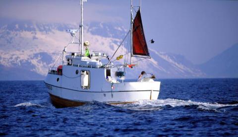 Norsk torsk och kolja får MSC-märkning
