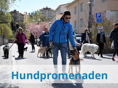 Välkommen på Hundpromenaden den 6 maj -      Ett välgörenhetsevent för Hundar Utan Hem