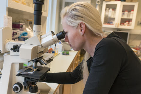Nathalie Scheers' research focuses on the cellular effects of dietary metals