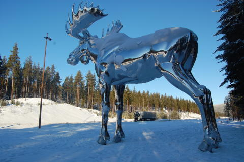 Größter Elch der Welt im Winter (1)