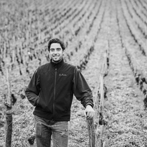 Thomas Bouley – ung men väl rotad vinmakare i hjärtat av Bourgogne
