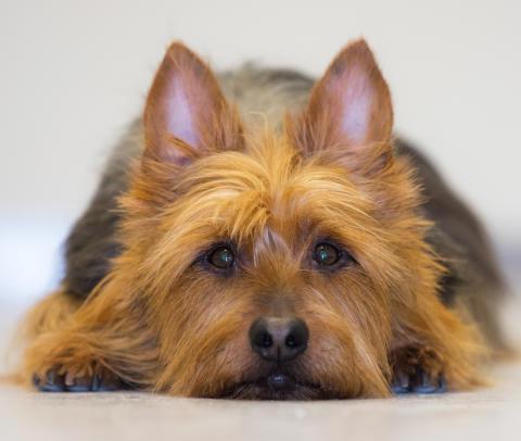 Veterinärens rekommendationer - vad gör jag när min hund kräks och har diarré?