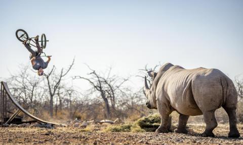 Flair for Rhino
