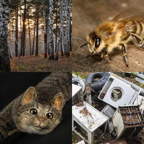 Vår natur – en ny basutställning om naturen och djuren närmast oss