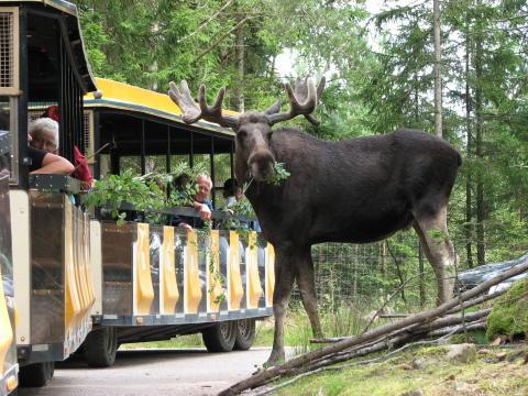 Elgparken i Småland