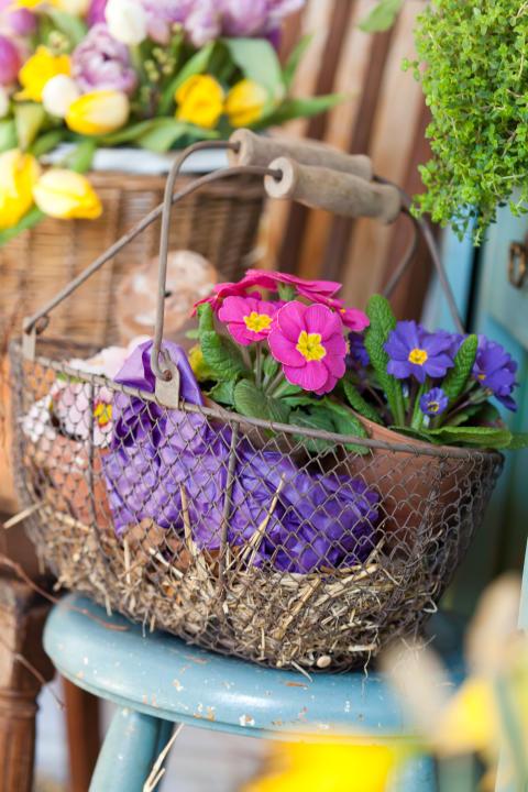 Månadens blomma - februari 2012