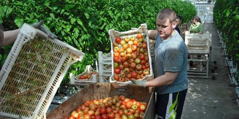 Tropisk delikatess växer hållbart i Blekinge.