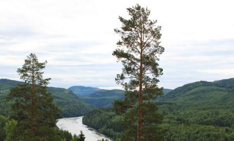 Skog i Norrlands inland