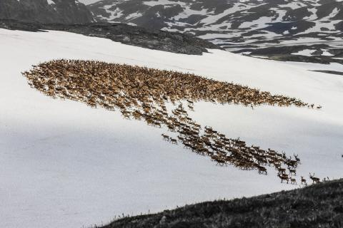 2015 Sony World Photography Awards, National Award Norway