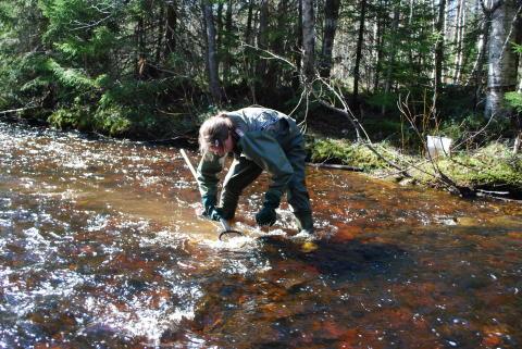 Ny rapport om försurade vatten:  Stor ökning av bottenlevande djur efter kalkning