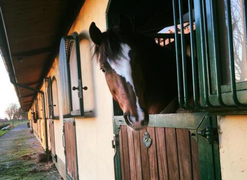 Leaderprojekt ledde till hästrunda