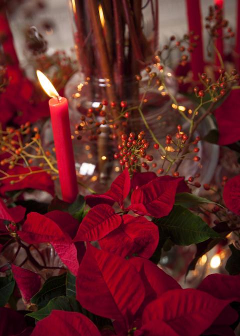Röd vintagejul med julstjärnor 3