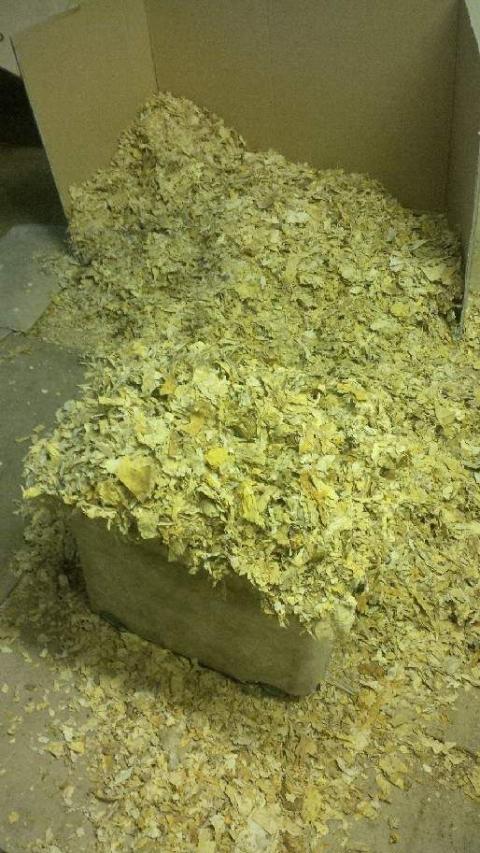 Op Ostrich inside tobacco factory 4