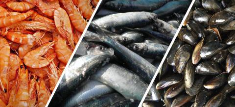 Ny forskning återvinner näring ur processvatten från sjömatsindustrin