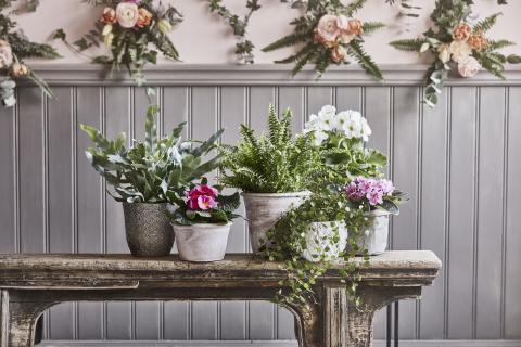 Romantisk lantidyll -  vårväxter i kruka