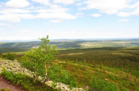 Naturvårdsverket storsatsar på Dalarnas natur