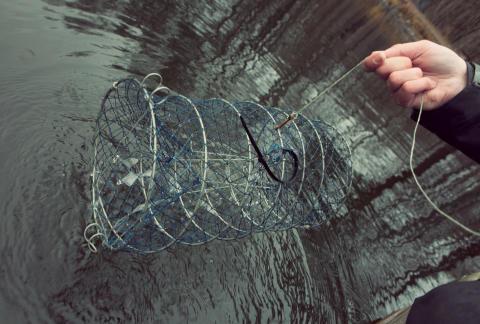 HaV-förslag till nya regler för ett fortsatt fiske av signalkräfta i Sverige