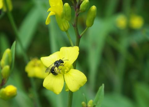 Få bin trots omväxlande jordbrukslandskap
