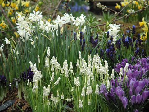 Nu kommer våren till Stadsträdgården!