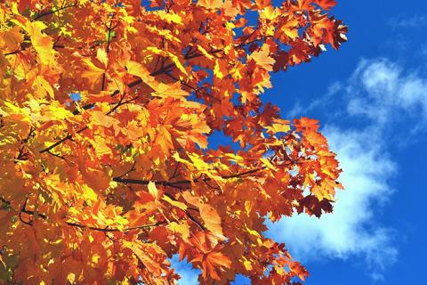 Was tun mit dem Herbstlaub?