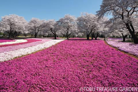 Tobu Treasure Garden(1)