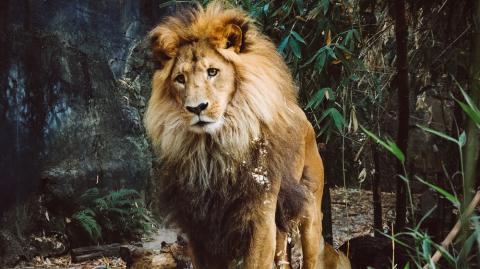 #YOLO: Der Löwe auf dem Campus
