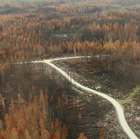AB Karl Hedin ger 3,52 kr/m3fub extra till branddrabbade skogsägare