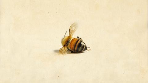Illustrasjon Bienes historie