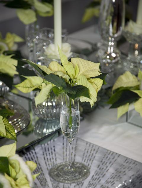 Vit fest med julstjärnor 1
