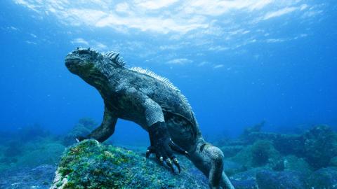 Cosmonova utforskar Galapagos i ny 3D-film