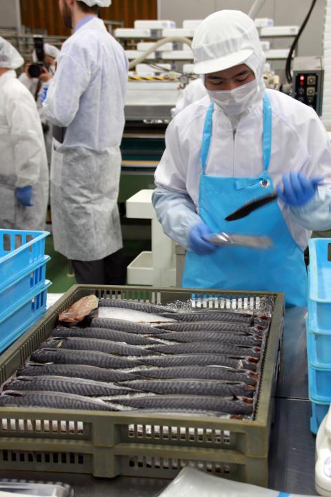 Norsk makrell i Japan