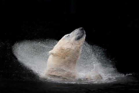 Michaela Smidova_Czech Republic_Winner Open Nature and Wildlife_SWPA 2016 von Sony