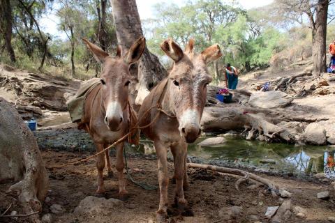 WTG-Esel-Tansania-Wasser