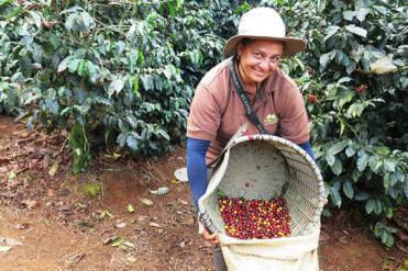 Nytt kaffesamarbete ska driva hållbarhetsfrågan