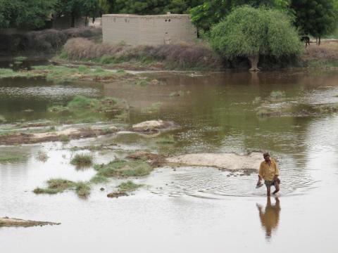 I vattendränkt mark i Sindh-provinsen