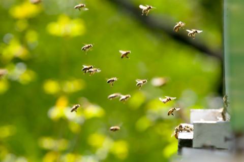 Kolmas yritysten biodiversiteettitoiminnan valmennusohjelma käynnistyy