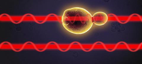 Cellernas stressreaktioner mäts med hjälp av en laserstråle som delas.