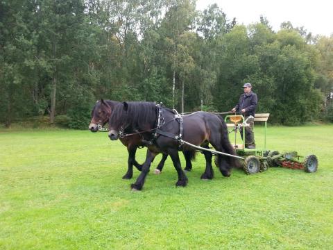 PRESSINBJUDAN: Häst klipper gräset i Stenhagen för första gången