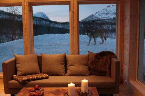 Spend the night with wolves