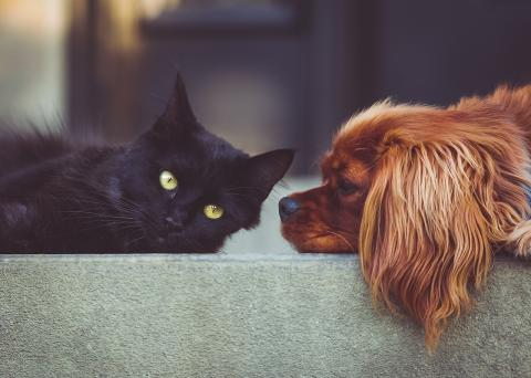 Hundar och katter får också diabetes