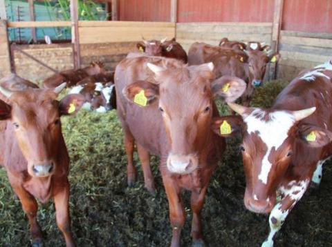 Modernt och ekologiskt jordbruk - Öppen Gård på Nibble den 1 september
