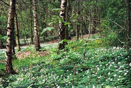 Improving our woodlands for future generations