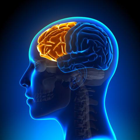 Förhandla inte med frontalloben avstängd!