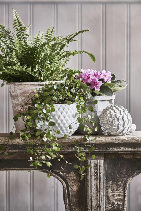 Romantisk lantidyll  - krukväxter