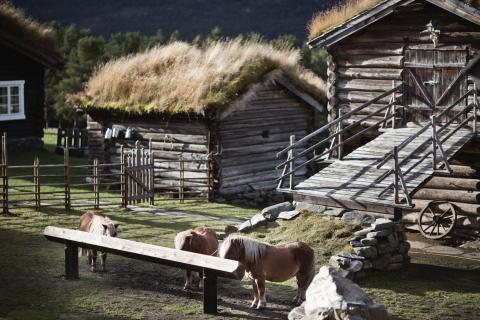 Die Glittersjå Mountain Farm ist ein Paradies für Menschen und Tiere mitten im Jotunheimen Nationalpark in Mittelnorwegen.