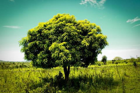 Ny fototävling korar Sveriges bästa trädbild