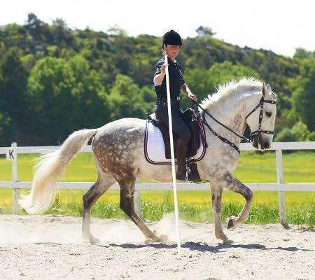 Sveriges första VM-lag i Working Equitation uttaget